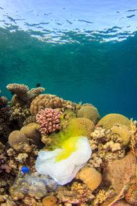 plastic pollution, oceans