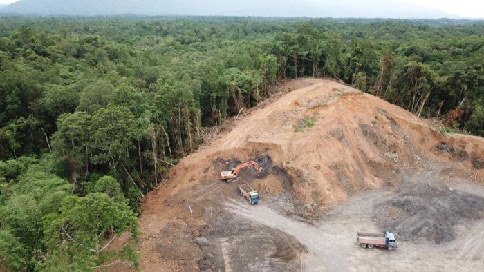 deforestation, environment