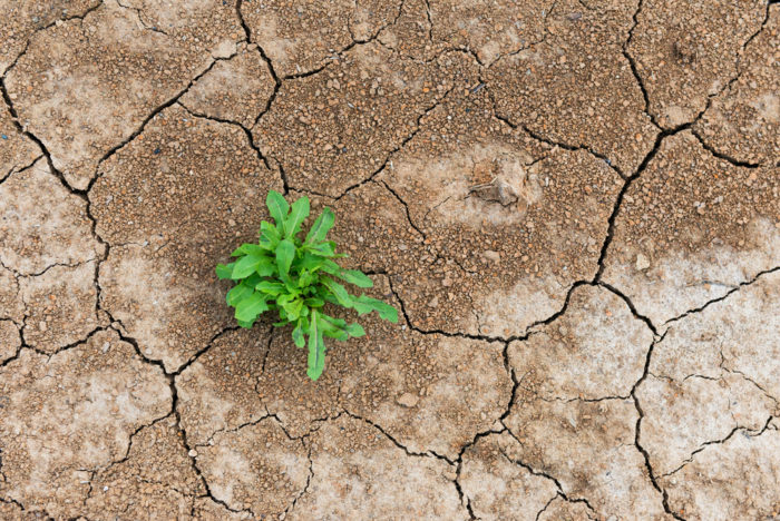 a plant grows in dry, cracked earth